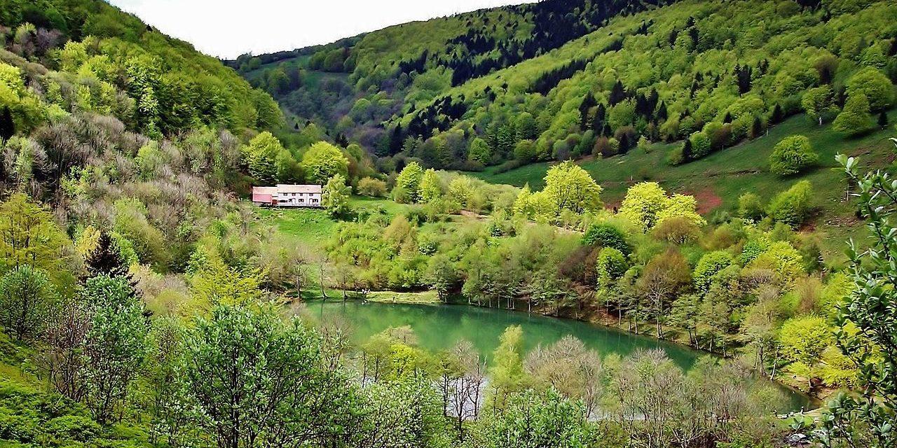 La forêt du Sprickelsberg n'est-elle qu'une usine à bois ?