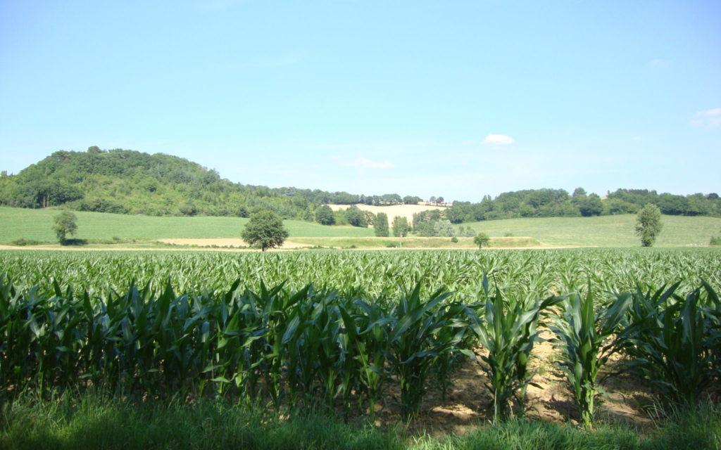 A Colmar et Wintzenheim, Tiefenbach environnement dissèque les candidats aux municipales, et reçoit le soutien du professeur Seralini sur le lindane